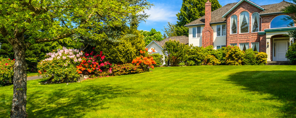 3 Tips For a Low Maintenance Yard