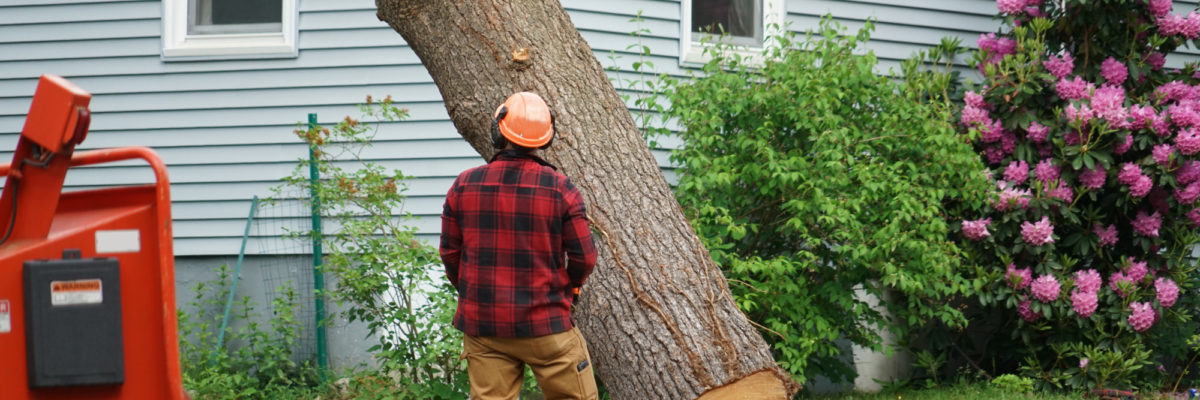 What is the Average Cost of Tree Removal? A Helpful Price Guide