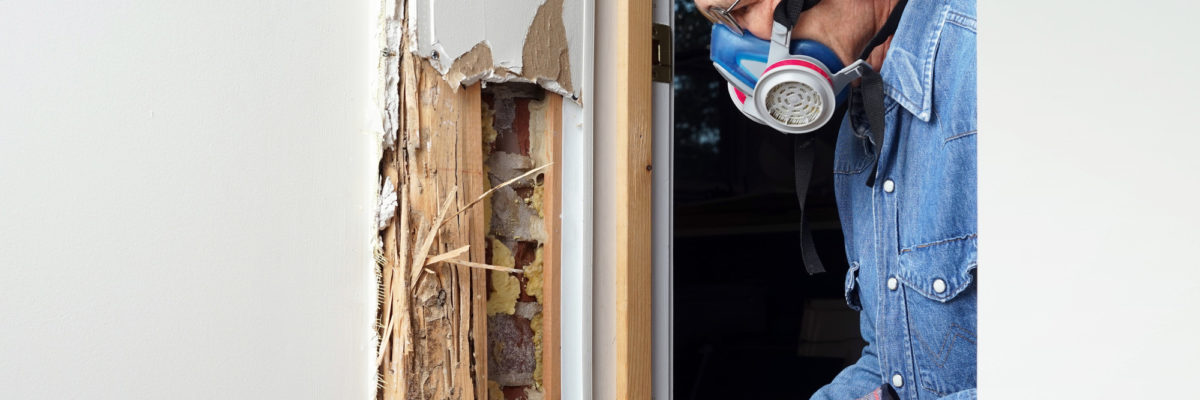 How Much Does a Termite Inspection Cost on Average?