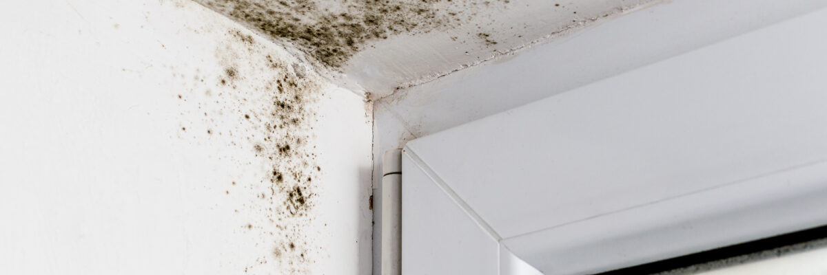 A Guide to 10 Different Types of Mold Hiding in Your Home (and What to Do About It!)