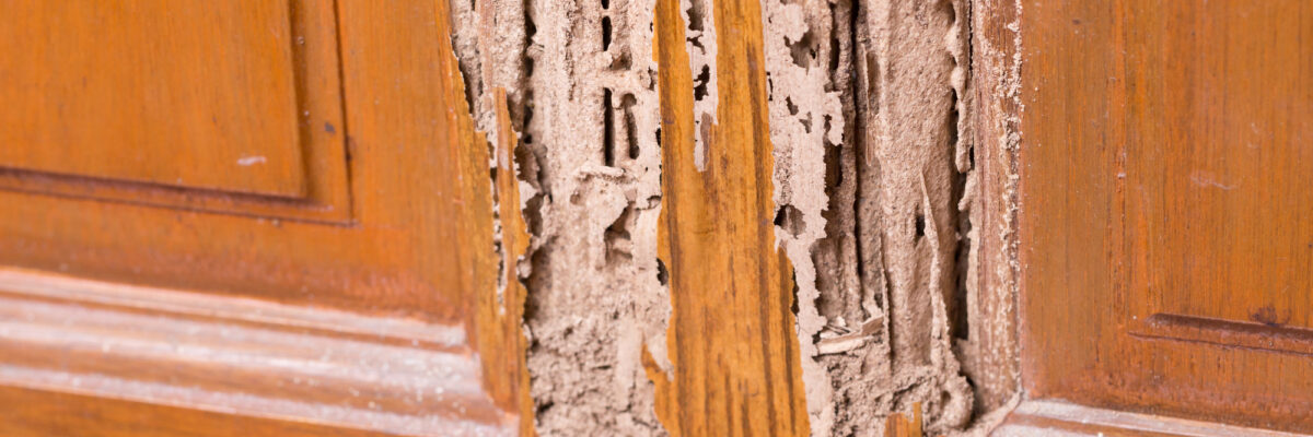 How to Recognize the Warning Signs of a Termite Infestation